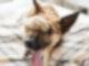 210117 Warum Darum Schlosshund