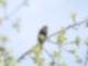 Warum-Darum-Vogel-singen