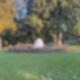 Das riesige Vogelnest am Britzer Rohrdommelweg