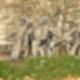 Die sieben Schwaben am Fehrbelliner Platz